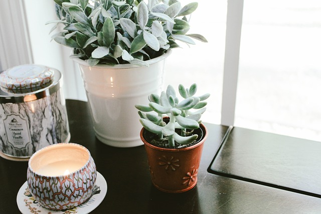 Plants for happiness!